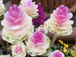 花のクローズアップの写真・画像素材[3030261]