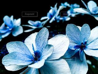 花のクローズアップの写真・画像素材[3375456]