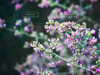 花のクローズアップの写真・画像素材[4414860]