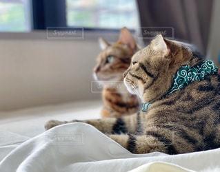 猫の写真・画像素材[2063915]