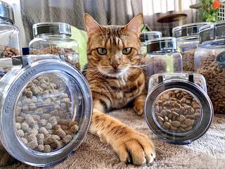 フレッシュロックと猫の写真・画像素材[2862574]