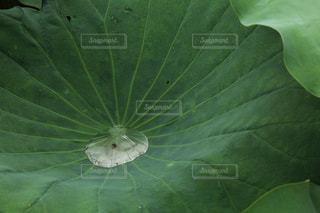 緑の植物のクローズアップの写真・画像素材[2129814]