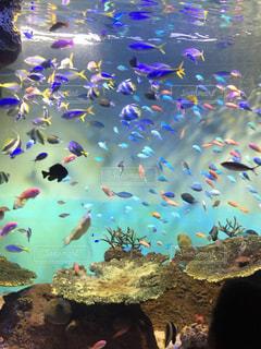 魚の写真・画像素材[2385544]