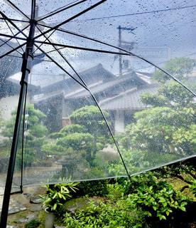 木,雨,傘,庭,水,水滴,家,樹木,屋根,雫,日本家屋,ビニール傘,雨の日,瓦,カサ