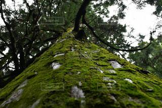 若杉山の大杉⛰の写真・画像素材[2211156]