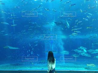 水族館の写真・画像素材[2140136]