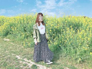 菜の花の写真・画像素材[2097594]