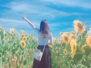 女性,ファッション,風景,花,夏,ひまわり,景色,洋服,人物,人,Tシャツ,シャツ,天気,コーデ,夏服,半袖