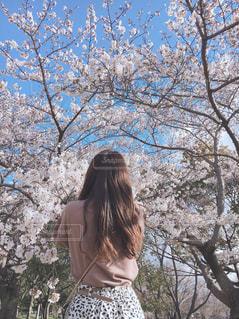 桜の写真・画像素材[3061711]