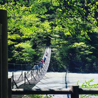 新緑の吊り橋の写真・画像素材[2098117]