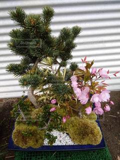 木の上の花の花瓶の写真・画像素材[2121457]