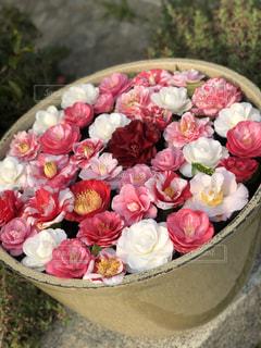 花のクローズアップの写真・画像素材[2121674]