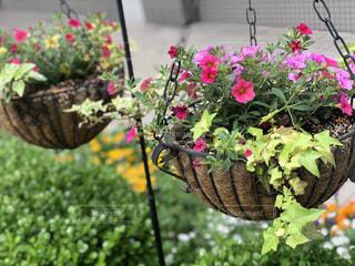 花のクローズアップの写真・画像素材[2141583]