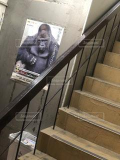 ゴリラが守る階段の写真・画像素材[2147191]