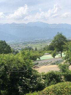 背景に山がある木の写真・画像素材[2210805]