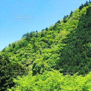 緑豊かな森のクローズアップの写真・画像素材[2210813]