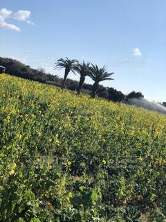 野原の黄色い花の写真・画像素材[2210816]