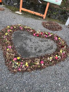 花,屋外,綺麗,落ち葉,ハート,可愛い,地面,装飾,草木,インスタ,インスタ映え