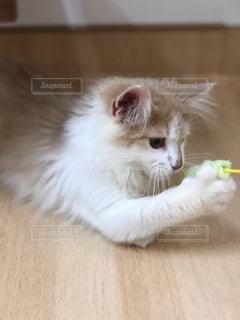 木の表面に横たわる猫の写真・画像素材[2291581]