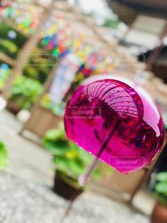 ピンクの花のクローズアップの写真・画像素材[2344761]