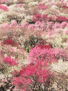 緑の葉を持つピンクの花の写真・画像素材[2344849]