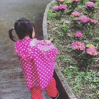 ピンクの花を見た小さな女の子の写真・画像素材[2432380]