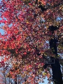 紅葉の季節の写真・画像素材[2510821]