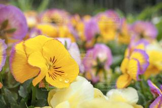 風景,花,春,お花畑,水,水滴,景色,お花,水玉,日本,雫,野外,一眼レフ,しずく,室外
