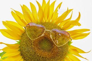 花のクローズアップの写真・画像素材[2142267]