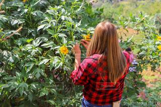女性,風景,花,森林,屋外,少女,人物,背中,人,後姿,フィリピン,セブ,草木