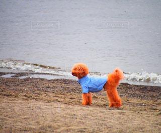 No.283206 犬