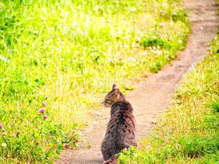 猫,花,cat,キャット,横見