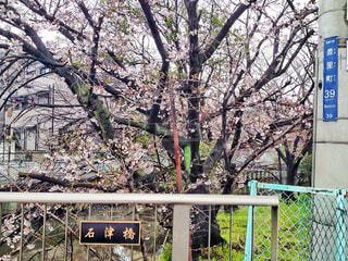 春の写真・画像素材[360326]