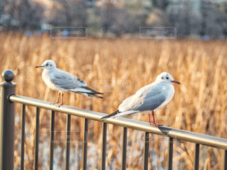 鳥,ツーショット