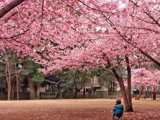春の写真・画像素材[408823]