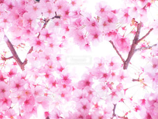 春 - No.411038