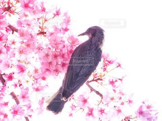 春の写真・画像素材[413300]