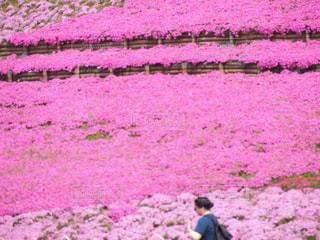 花畑の写真・画像素材[465980]