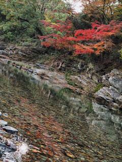 川と共にの写真・画像素材[864969]