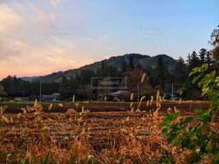 故郷の秋の写真・画像素材[881542]
