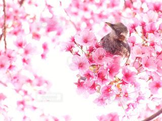 近くの花で - No.882319