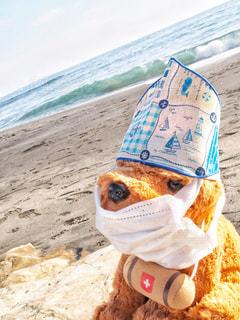 救助犬の写真・画像素材[1103075]
