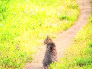 草の上を歩く黒い熊カバー フィールドの写真・画像素材[1262064]