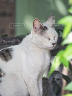 その口を開いて白猫の写真・画像素材[1269302]
