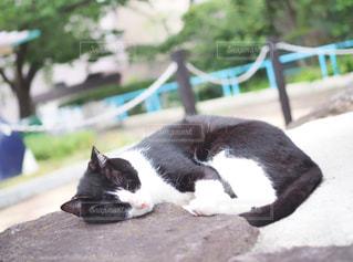 地面に横になっている猫の写真・画像素材[1285022]