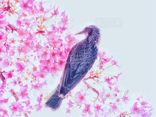 カラフルな鳥が花に止まってください。の写真・画像素材[1443345]