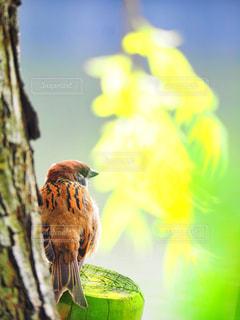 枝の上に座って鳥の写真・画像素材[1451606]