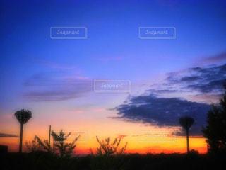 背景の夕日とツリーの写真・画像素材[1466067]