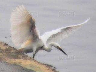 近くに水の体の上を飛んでいる鳥のアップの写真・画像素材[1700220]