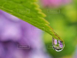 水の写真・画像素材[2161419]